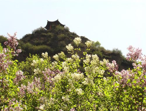 老爷山的春天 - 4a景区照片 - 青海大通老爷山风景区